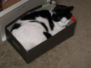 Shoebox Mia
